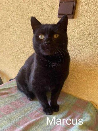 Wspaniały kot, pomimo przeżyć, szuka dobrego domu