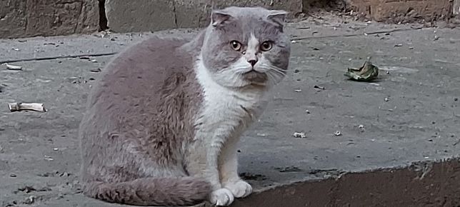 Найден кот. Серо-белый окрас.