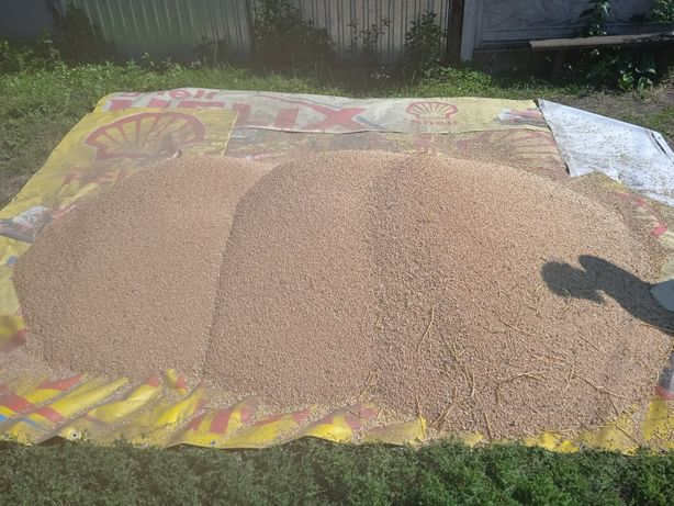 Продам срочно пшеницу