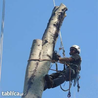 Wycinka i pielęgnacja drzew. Usługi rębakiem. Frezowanie pni
