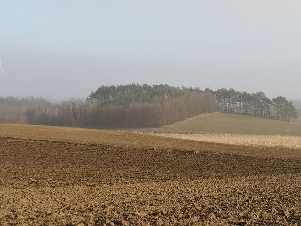 Wydzierżawię pole - Kijewo Królewskie. Grunty orne 3,5 ha. Pod uprawę