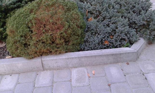 Obrzeże betonowe trawnikowe, chodnikowe, krawężnik 100x25x8 cm