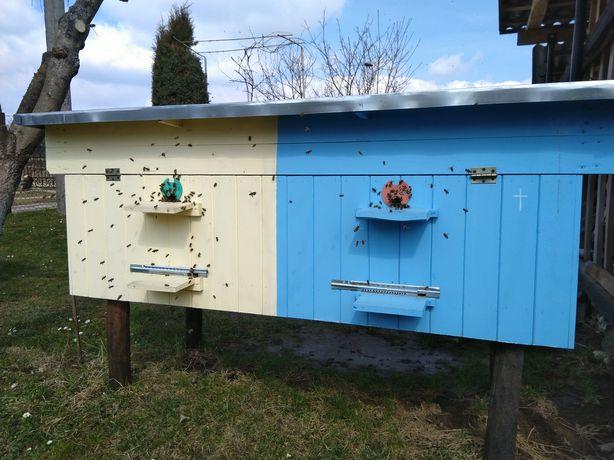 Продаю бджоли, пакети, бджолосімї