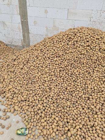 Ziemniaki wielkość sadzeniaka Gala Vega Denar