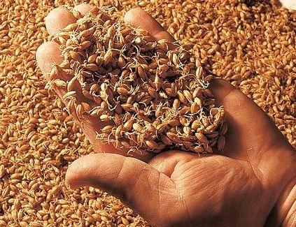 Солод ячменный ржаной пшеничный