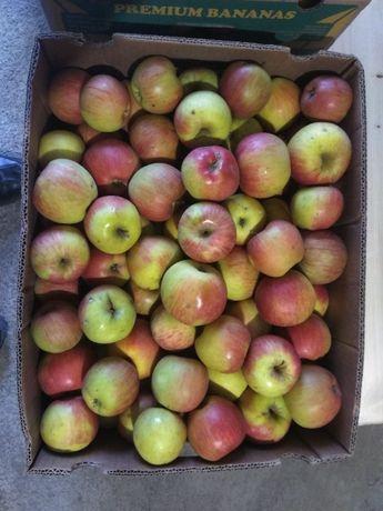 Продам яблука. Різні сорти. Доставка
