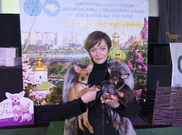 Профессиональный питомник FCI и WKU предлагает щеночков русского тоя!