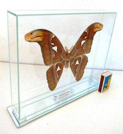 Бабочка в стекле