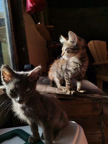 Uma gata e um gato para dar