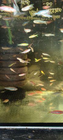 Sprzedam rybki kolorowe