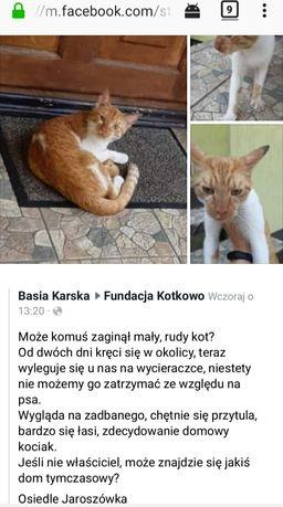 Błąka się rudo-biały kotek