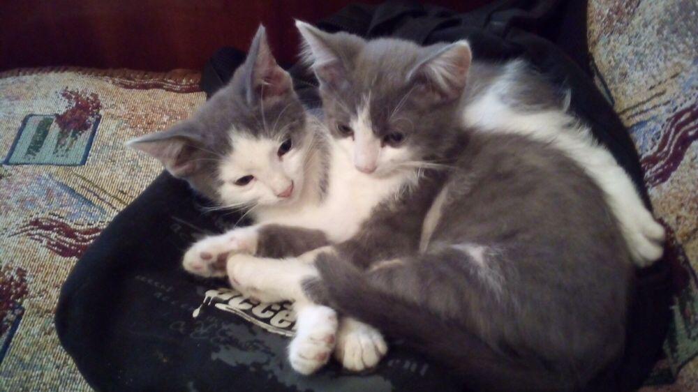 Отдам котят в хорошие руки Мелитополь - изображение 1