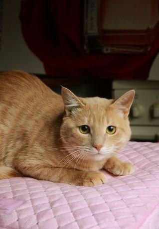 Яркий рыжий котик