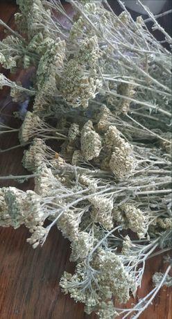 Деревій тысячелистник також полин