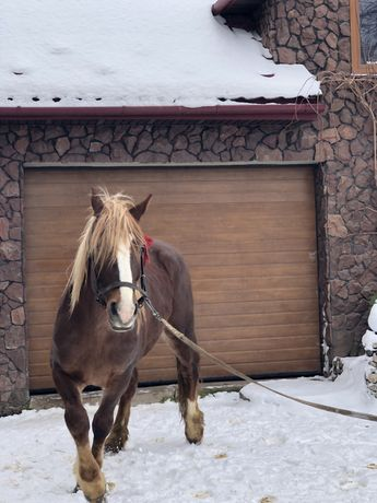 Продам коня, жеребця