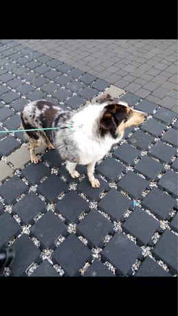 Znaleziono psa Morgi/Larysz Mysłowice