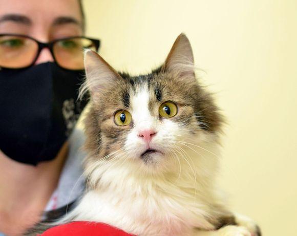 Котик Амур (кот, кошечки, котята)