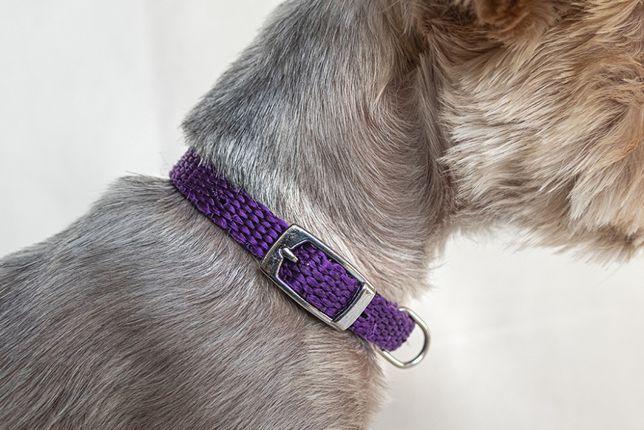 Fioletowa obroża dla psa lub kota