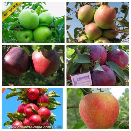 Купить саженцы плодовых деревьев по лучшим ценам в Украине. Доставка.