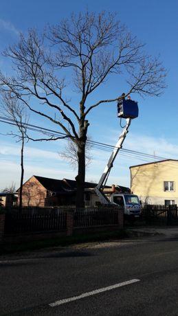 wycinka drzew-zwyżka- podnośnik częstochowa-kłobuck-usługi-21 metrów