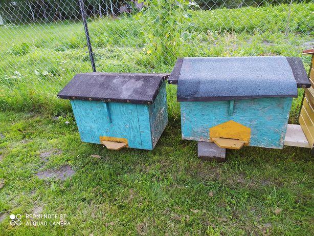 Ule dadant pszczoły