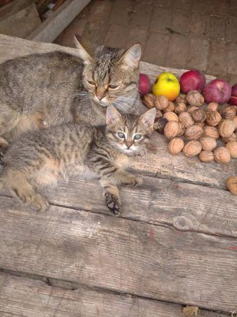 Миле кошеня шукає собі господаря