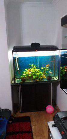 Akwarium 300 litrów