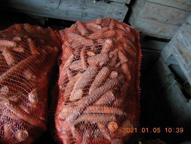 marchew Paszowa odpadowa oraz buraki ćwikłowe i pietruszka