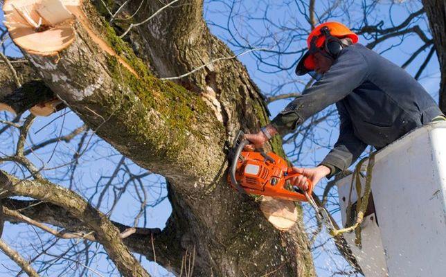 Обрезка, спил деревьев, Дробление веток с вывозом Нал.