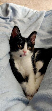 Котенок мальчик по имени Феликс ищет дом! Котята