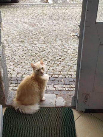 Zaginął kot  Nazywa się Percy, reaguje na imię.