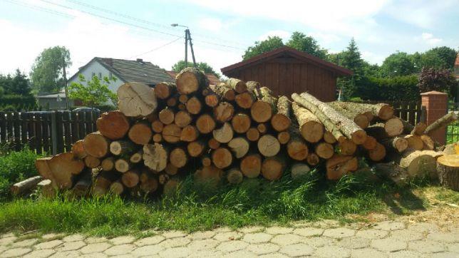 Olcha - opał, papierówka, tartak, biomasa - do pozyskania