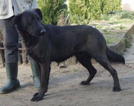 Duży wesoły pies czeka w schronku w wojtyszkach aktualne