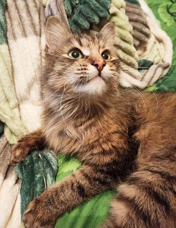 Кошечка Лия стерилиз. Привезу!