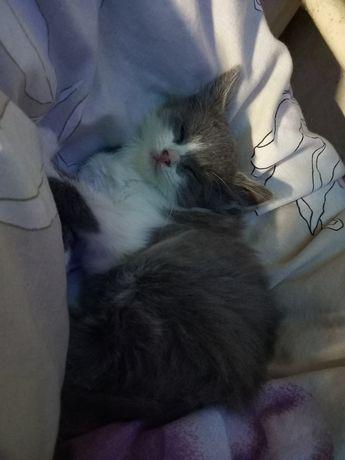 Отдам котёнка в хорошие руки)