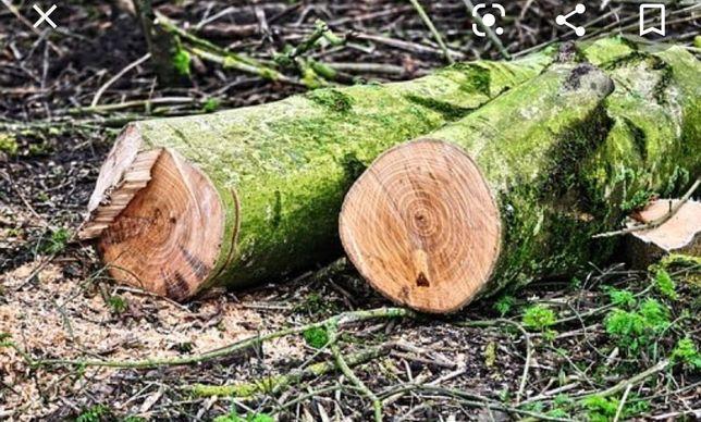 Wycinanie i przycinanie drzew ( z możliwością podnośnika)