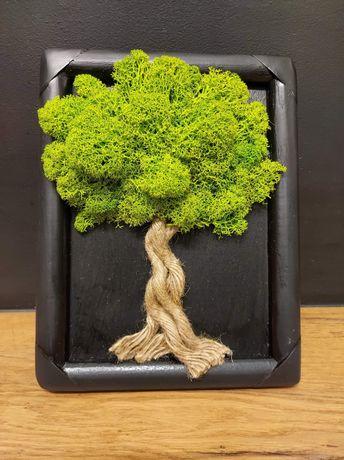 Drzewko szczęścia w drewnianej czarnej ramie