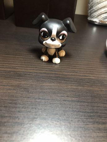 littlest petshop czarny pies