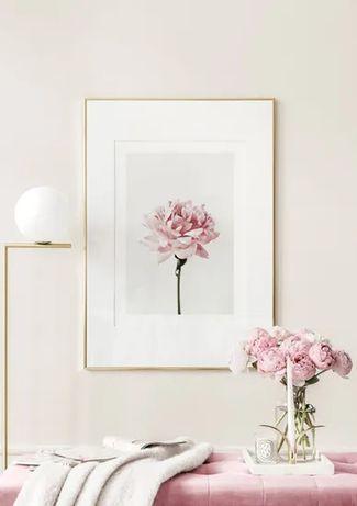 Obraz Plakat Różowy Kwiat  50x70