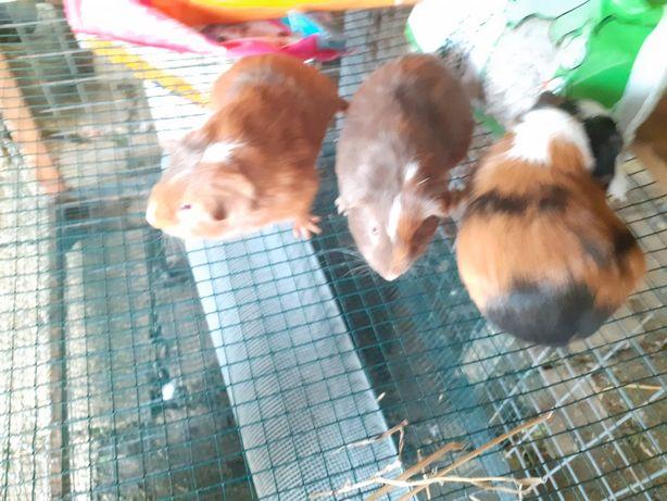 Animais roedores