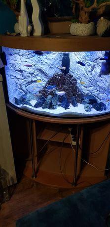Cały zestaw akwarium narożne 200l