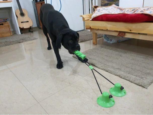 Brinquedo de força e lavagem dentária para cães