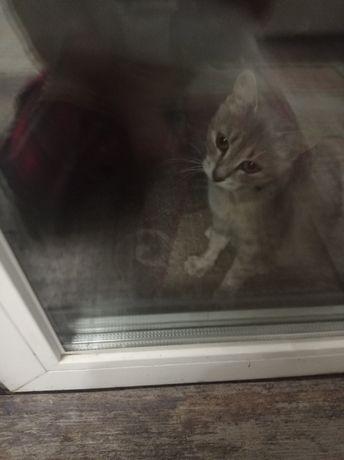 Нашлась кошка на улице Парковоя