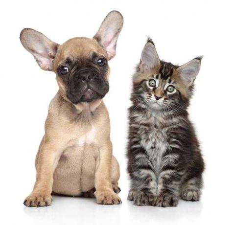 услуги для животных(передержка)