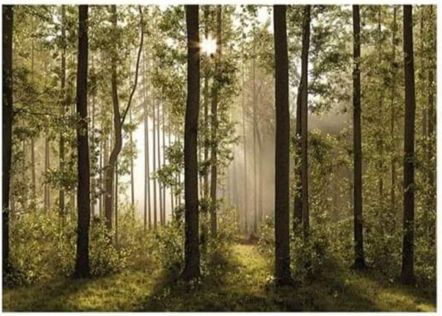 Fototapeta LAS liście Drzewa Gotowa Tapeta Rośliny 360 x 254 cm
