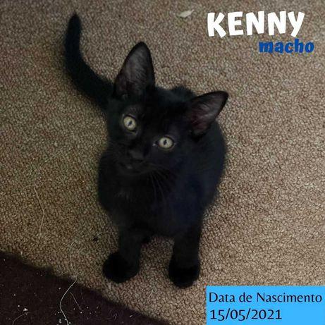 Gatinho 2 meses para adoção (Kenny)