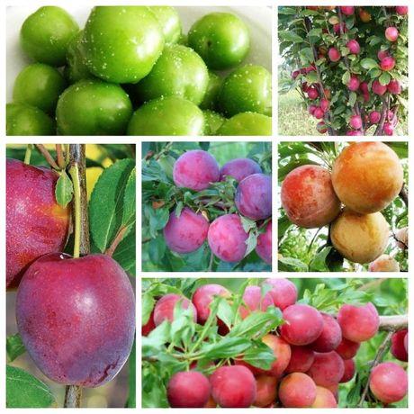 Саженцы нектарина,персик,абрикос,слива,вишня,черешня,алыча,айва,малина