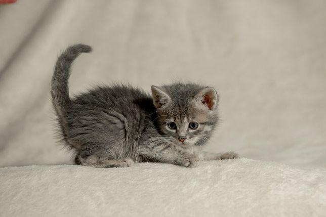 4 Котенка ищут семью. В квартиру