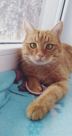 Zaginęła ruda kotka!