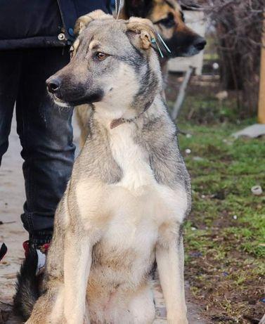 Красивейший крупный щенок ищет дом